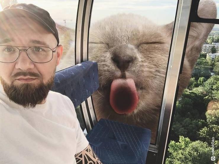giant cat photoshops - Selfie - O odaoboko