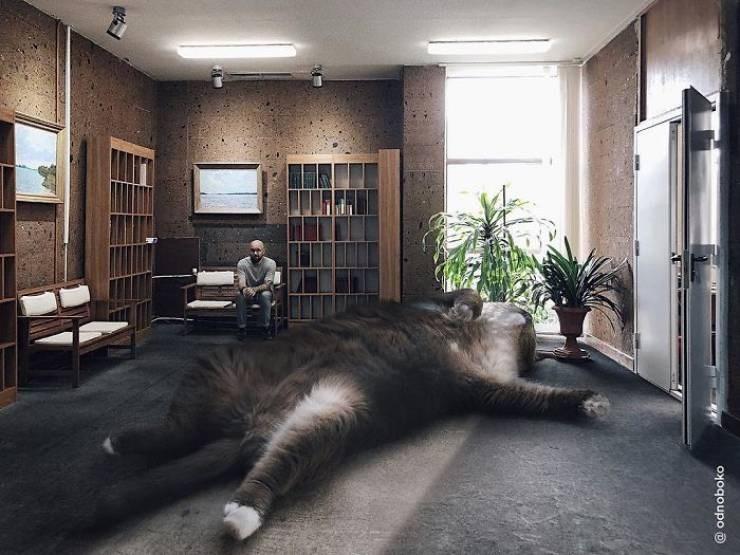 giant cat photoshops - Floor - @ odnoboko
