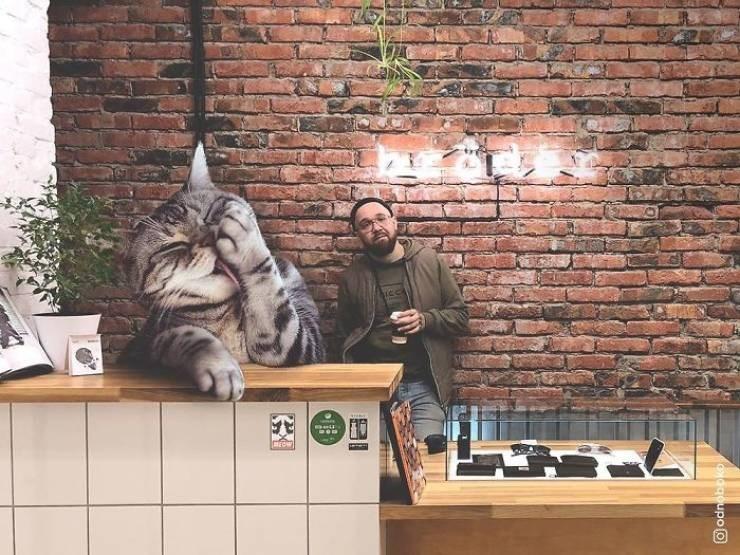 giant cat photoshops - Brick - BECW goupo
