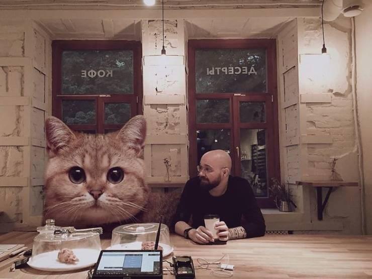 giant cat photoshops - Cat - УЕСЕЬРГ ЭФОЯ