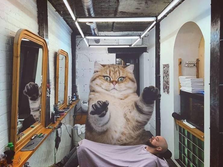giant cat photoshops - Cat