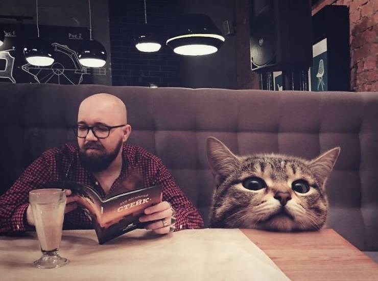 giant cat photoshops - Cat - Puc 2 CTERK