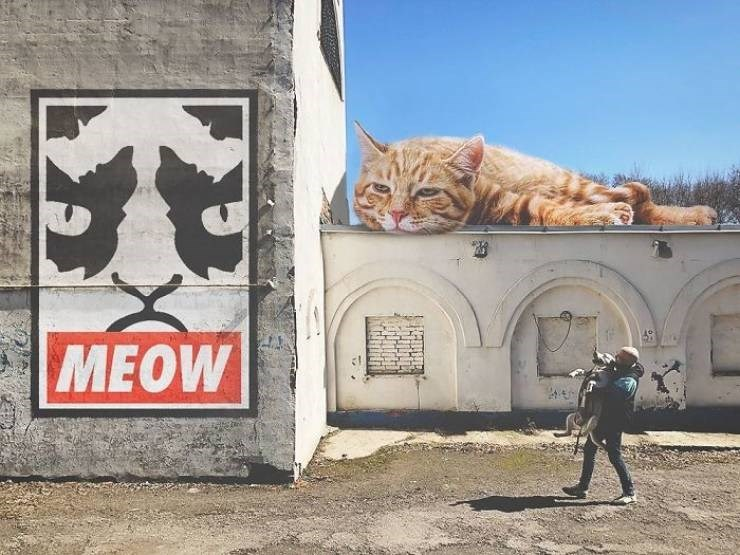 giant cat photoshops - Cat - MEOW