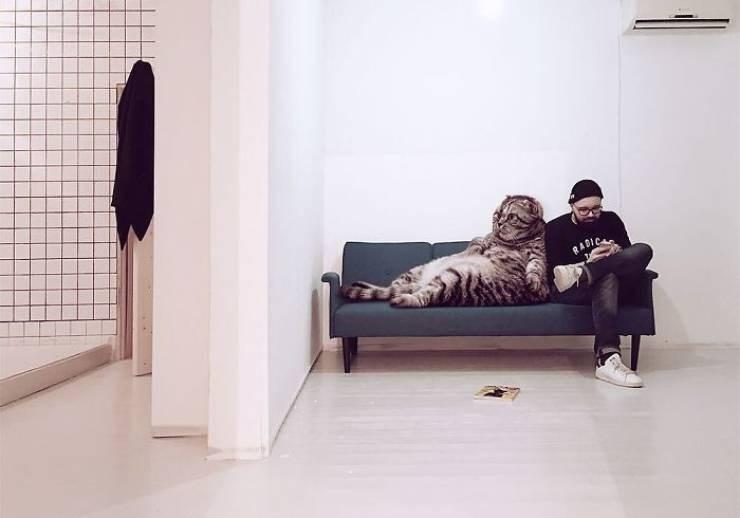 giant cat photoshops - Furniture - RADIC