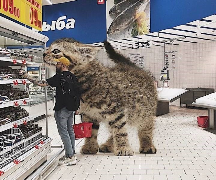 giant cat photoshops - Cat - KM! ыба oPEPOAY N