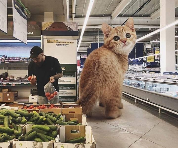 giant cat photoshops - Cat - рды для тЕх кто СОБИРАLТ ИДЕАЛЬНЫЙ УРОЖАЙ POВОИЕЛ УА ть метно RD АТ