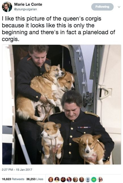 the queen tweets funny corgis royal - 9345082112