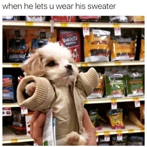 Dog - when he lets u wear his sweater VARICTS SNAS