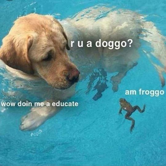 Canidae - rua doggo? am froggo Wow doin me a educate
