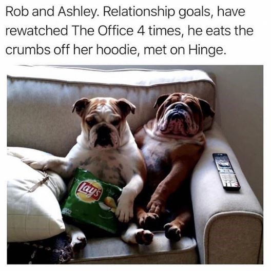 Dog breed - Rob and Ashley. Relationship goals, have rewatched The Office 4 times, he eats the crumbs off her hoodie, met on Hinge. ays