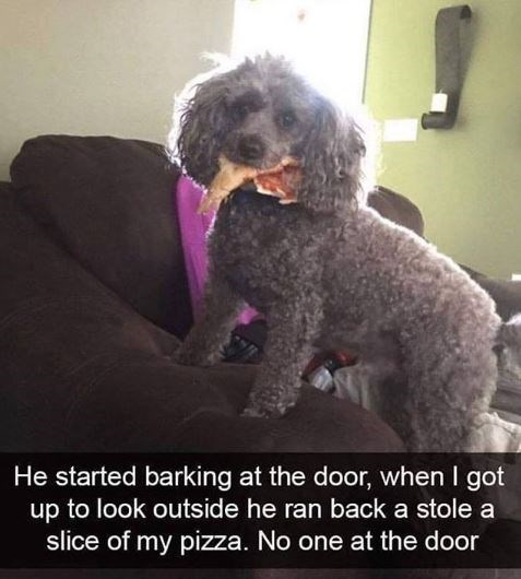 Dog - He started barking at the door, when I got up to look outside he ran back a stole a slice of my pizza. No one at the door