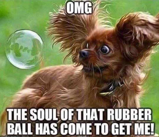 Dog - OMG THE SOULOF THAT RUBBER BALL HAS COME TO GET ME!