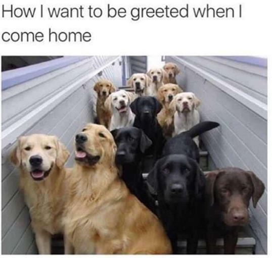 Vertebrate - How I want to be greeted when come home