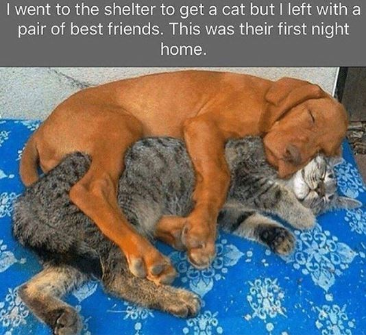 Canidae - I went to the shelter to get a cat but I left with a pair of best friends. This was their first night home.