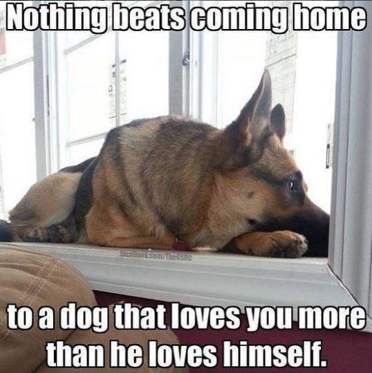 Vertebrate - Nothing beats coming home Scatiscom/bessot to a dog that loves you more than he loves himself.