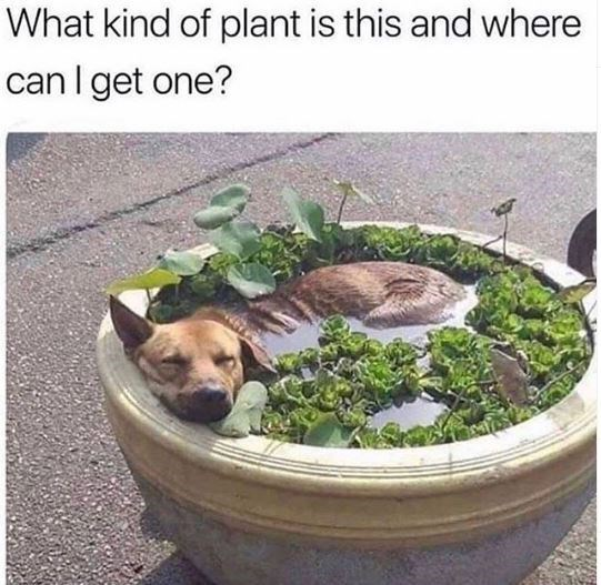 Canidae - What kind of plant is this and where can I get one?