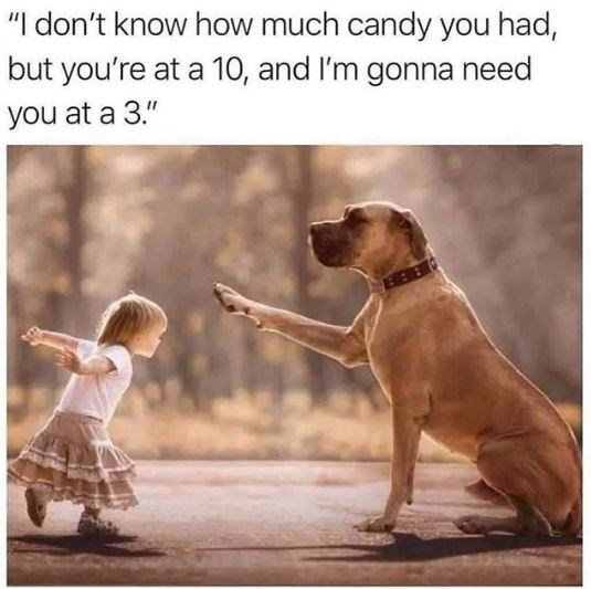 """Dog - """"I don't know how much candy you had, but you're at a 10, and I'm gonna need you at a 3."""""""