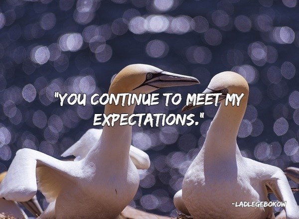 "insults - Bird - ""YOu CONTINUE TO MEET MY EXPECTATIONS."" LADLEGEBOKOW"