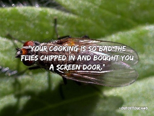 """insults - Insect - YOUR COOKING 1S SO BADTHE FEIES CHIPPEDIN AND BOUGHT YOU A SCREEN DOOR"""" OUTOFTOUCH49"""