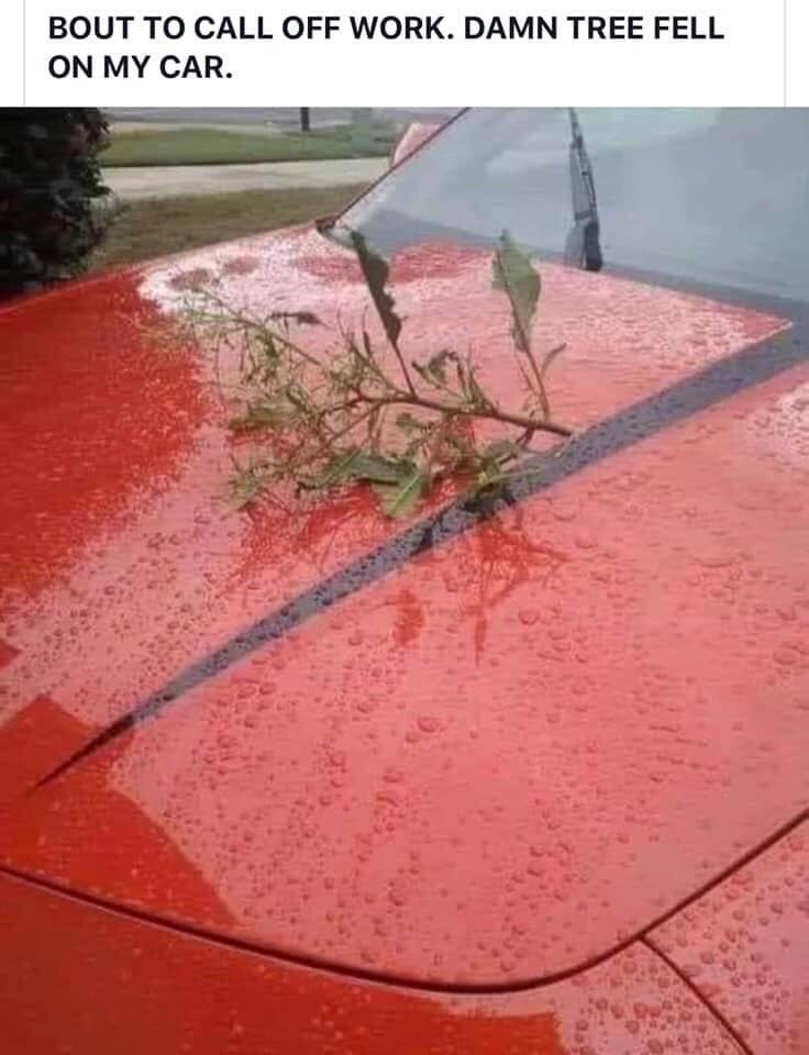 Plant - BOUT TO CALL OFF WORK. DAMN TREE FELL ON MY CAR