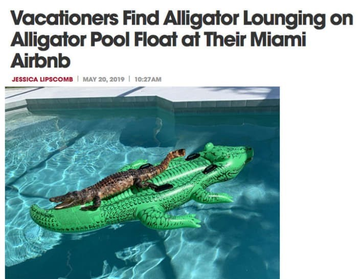 florida man - Alligator - Vacationers Find Alligator Lounging on Alligator Pool Float at Their Miami Airbnb MAY 20, 2019 10:27AM JESSICA LIPSCOMB