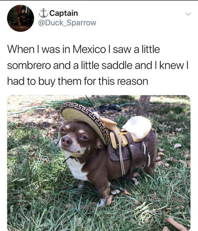 Dog - 土Captain @Duck Sparrow When I was in Mexico I saw a little sombrero and a little saddle and I knewI had to buy them for this reason