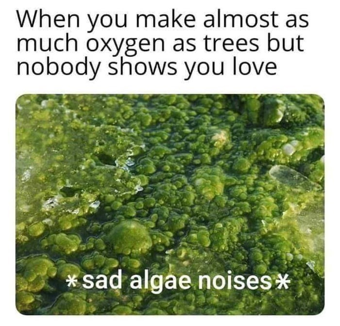 "Meme - ""When you make almost as much oxygen as trees but nobody shows you love; *sad algae noises*"""