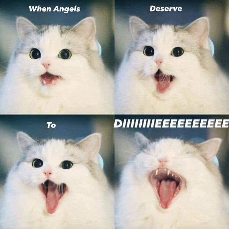 Cat - When Angels Deserve DIIIIEEEEEEEEEE To