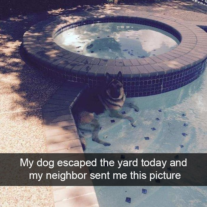 Water - My dog escaped the yard today and my neighbor sent me this picture