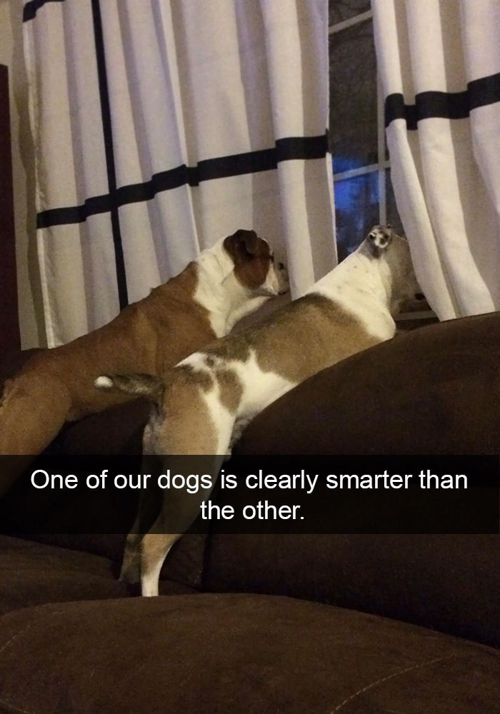 Companion dog - One of our dogs is clearly smarter than the other.