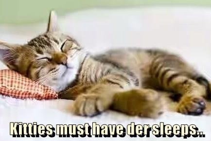 Cat - Kittiesmust havedersleeps.