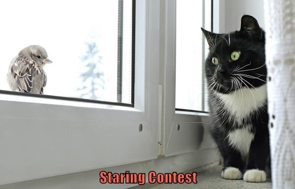 Cat - Staring Contest