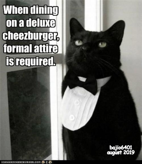cheezburger funny cat memes tuxedo - 9345453312