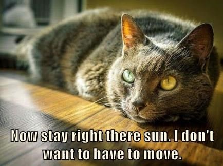 Cat - Now stay right there sun. I don't want to have to move.