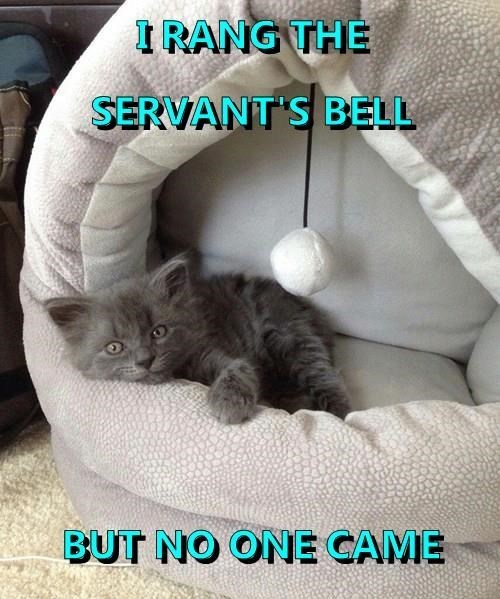 Cat - IRANG THE SERVANT S BELL BUT NO ONE CAME