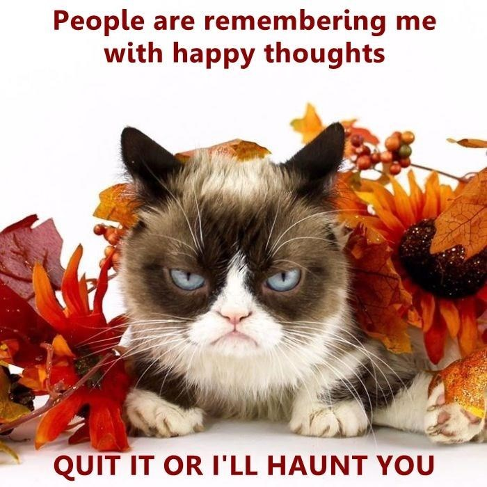 Cat - People are remembering me with happy thoughts QUIT IT OR I'LL HAUNT YOU