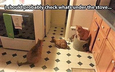 Cat - Ishould probablycheck whats underthestove..