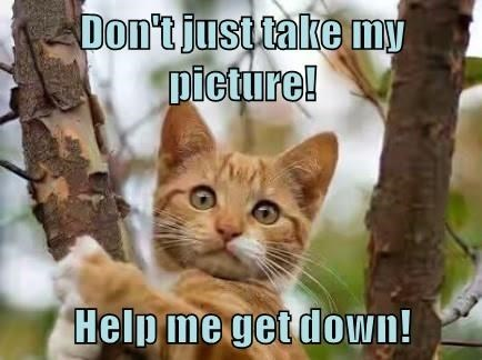 Cat - Don't just take my Dicture! Help me get down!