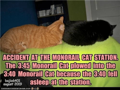 Cat - ACCIDENT AT THE MONORAIL CAT STATION The 3:45 Monorail Cat plowed into the 3:40 Monorail Cat because the 3:40 fell asleep at the station. bajio6401 august 2019 CANHASCHEE2EURGER cOM