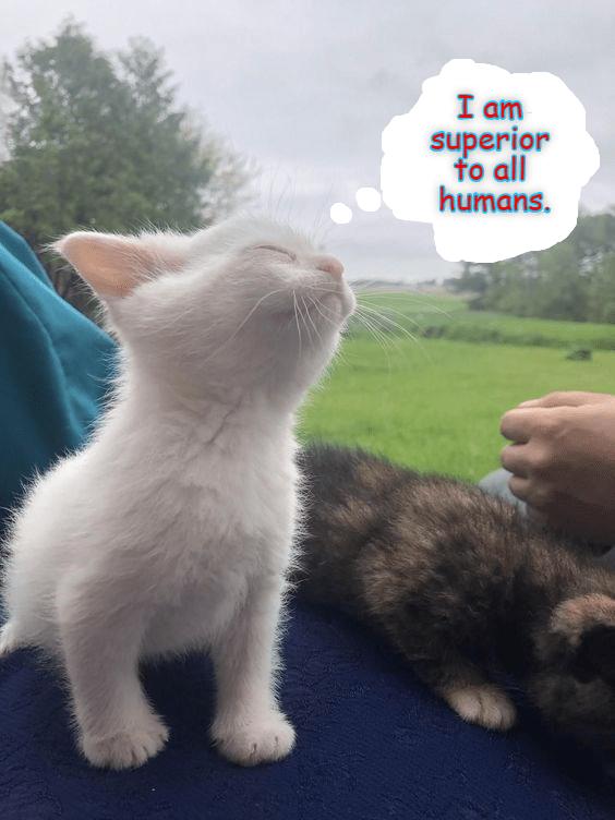 Cat - I am superior fo all humans.