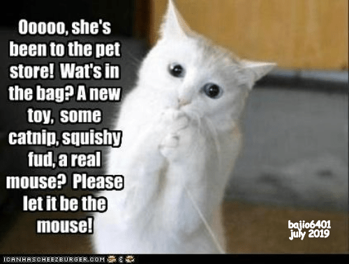 Cat - Ooo00, she's been to the pet store! Wat's in the bag? A new toy, some catnip,squishy fud, areal mouse? Please let it be the mouse! bajio6401 july 2019 BURGER COM ICANHRSCHEEZEur