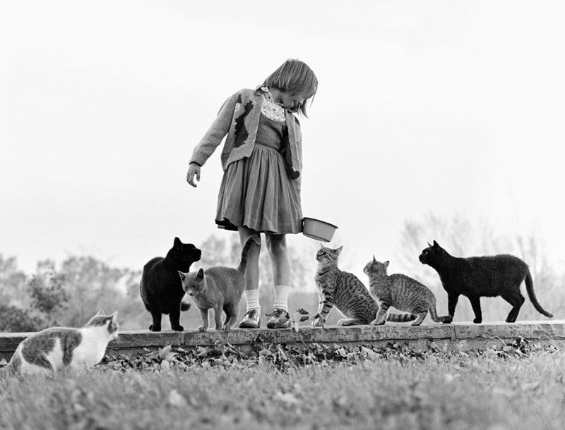 black and white photo of little girl in old fashioned clothes with group of cats outside