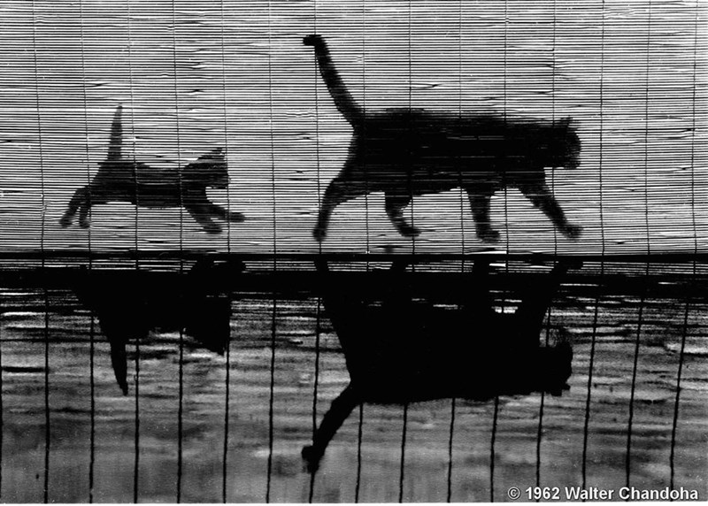 black and white picture cat and small kitten running past bamboo blinds with shadow on ground