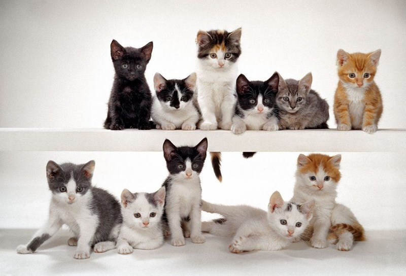 11 different colored kittens sitting on two levels of white shelves looking playful