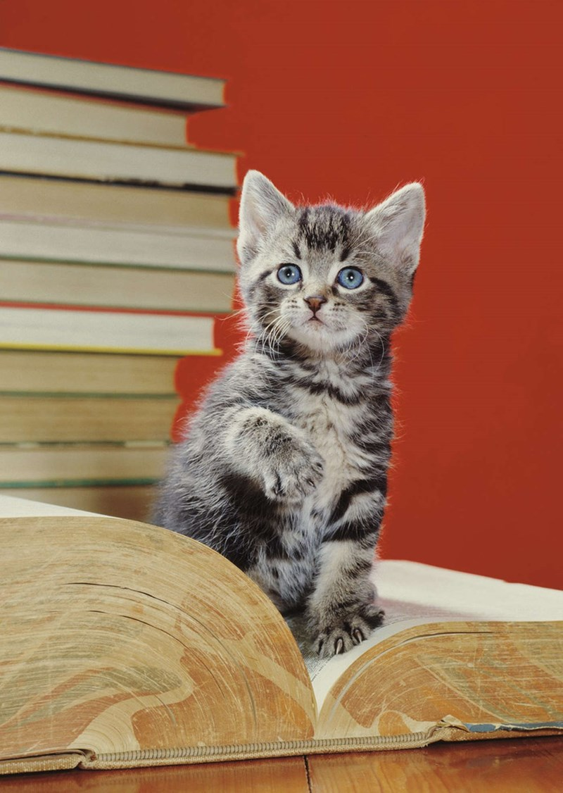 picture grey and black striped kitten sitting inside huge old book in front of stack of other books and red background