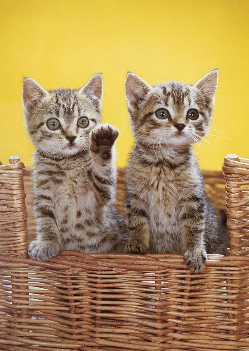 two kittens in a basket with yellow background