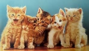 five kittens sitting next to each other in front of blue background