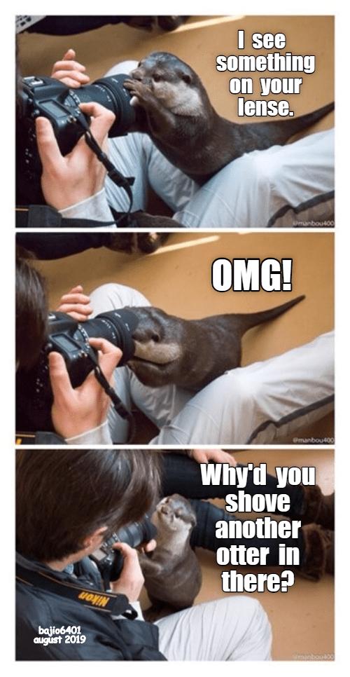 photography otters otter otter memes - 9345603072