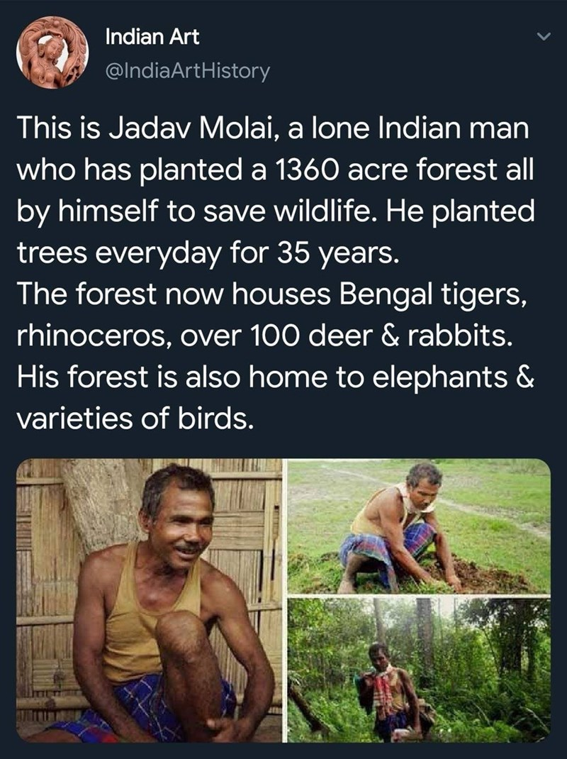 Text - Indian Art @IndiaArtHistory This is Jadav Molai, a lone lIndian man who has planted a 1360 acre forest all by himself to save wildlife. He planted trees everyday for 35 years. The forest now houses Bengal tigers, rhinoceros, over 100 deer & rabbits. His forest is also home to elephants & varieties of birds.
