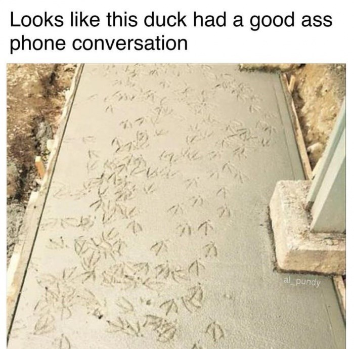 Wall - Looks like this duck had a good ass phone conversation 2 al pundy